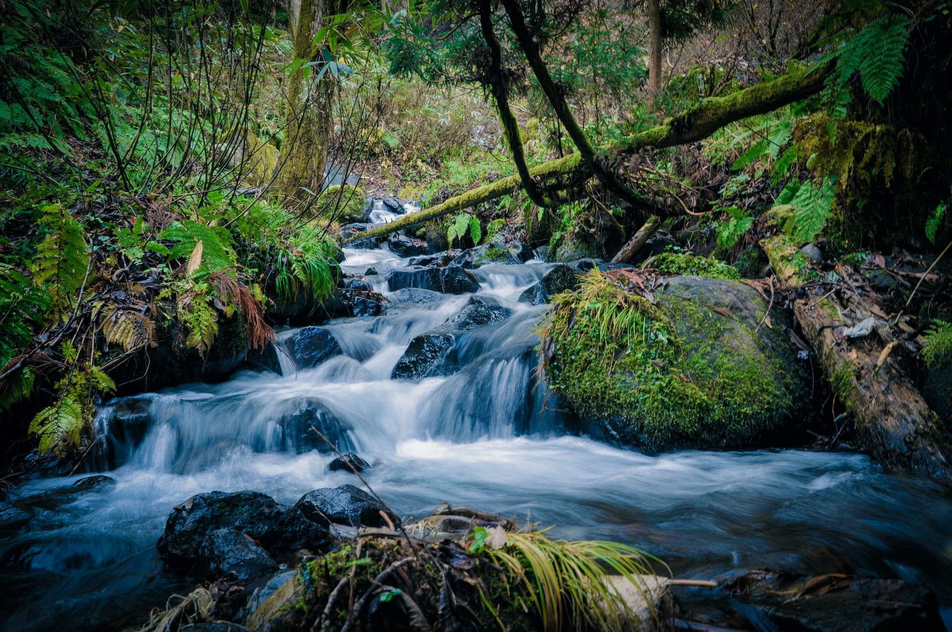 Small waterfall with greenery surrounding it