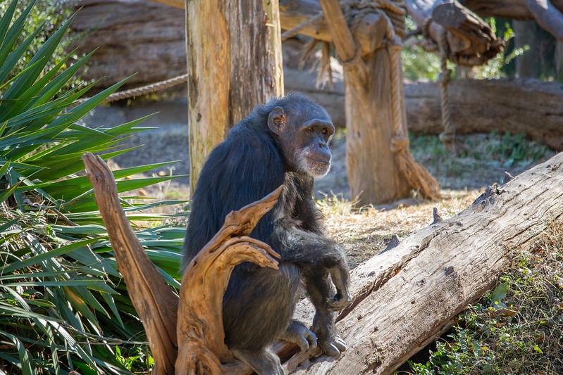 Dallas Zoo - DFW Family Fun by Hiley Hyundai of Fort Worth
