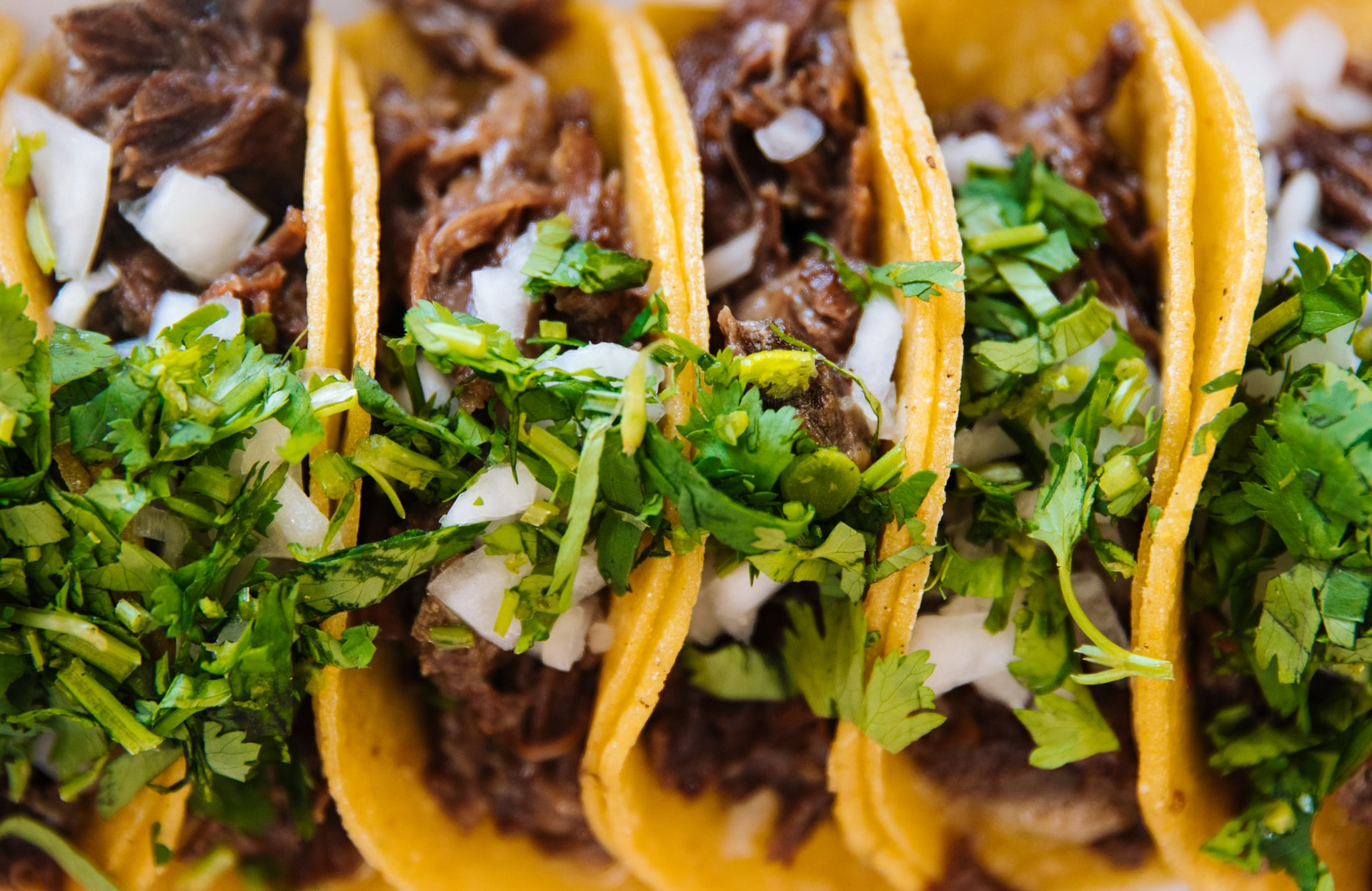 Row of soft shell tacos with meat, cilantro, and onions